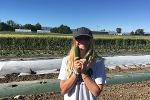 cucumber harvest