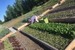 raised garden planting