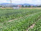 The Vegetables Look Wonderful