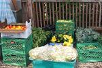 The Food Bank's Share is Ready for Pickup for Week 8