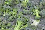 Broccoli Being Washed for the Food Bank