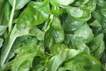 Final Basil of the Season is Picked and Ready for Pesto